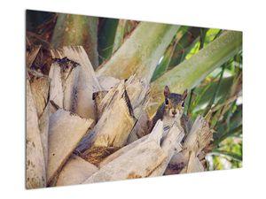 Obraz veverky na stromu (V021177V12080)