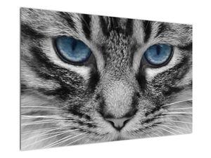 Obraz kočky (V021221V12080)
