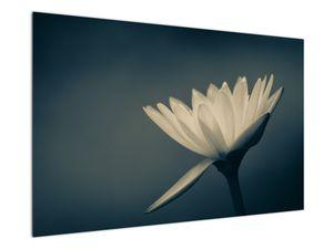 Obraz květiny (V021223V12080)