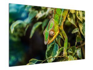 Obraz chameleona (V021236V12080)