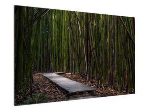 Obraz - Medzi bambusy (V021324V12080)