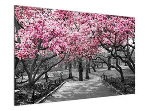 Obraz stromů Magnolíie (V021344V12080)