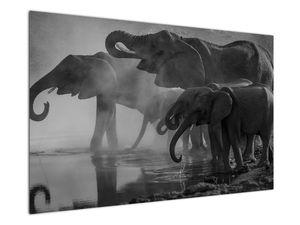 Obraz slonů - černobílý (V021575V12080)