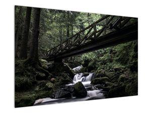 Obraz z černého lesa (V021686V12080)