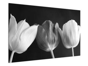 Kép - fekete-fehér tulipán virág (V021916V12080)