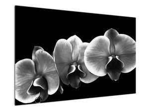 Obraz květu orchideje (V022015V12080)