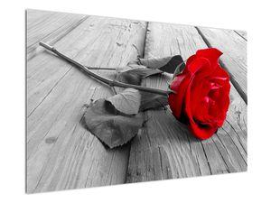 Obraz rudé růže (V022288V12080)
