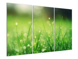Tablou - roua pe iarbă (V020169V120803PCS)