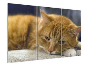 Obraz mačky (V020192V120803PCS)