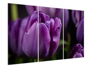 Obraz květů tulipánů (V020215V120803PCS)