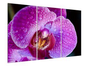 Detailní obraz květu orchideje (V020314V120803PCS)