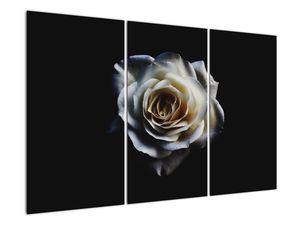 Obraz bílé růže (V020370V120803PCS)