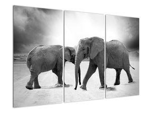 Obraz - černobílí sloni (V020398V120803PCS)
