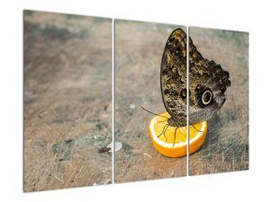 Obraz motýla (V020454V120803PCS)