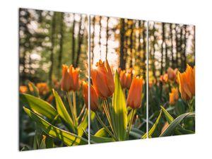 Obraz - oranžové tulipány (V020552V120803PCS)
