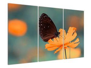 Obraz - motýl na oranžové květině (V020577V120803PCS)