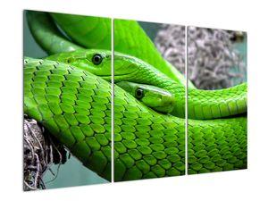 Obraz zelených hadů (V020689V120803PCS)