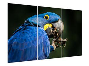 Obraz papouška (V020714V120803PCS)