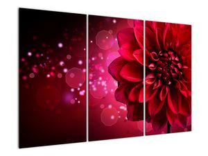 Obraz červené kvety (V020807V120803PCS)
