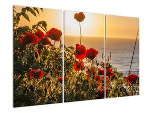 Bild eines Sonnenuntergangs mit Mohnblumen (V020877V120803PCS)