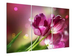 Obraz růžových tulipánů (V020887V120803PCS)