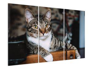Obraz kočky (V020889V120803PCS)