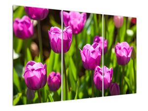 Obraz tulipánov na lúke (V020893V120803PCS)