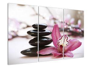 Obraz masážních kamenů a orchidee (V020910V120803PCS)