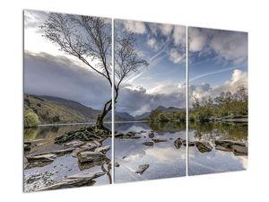 Obraz řeky se stromem (V020917V120803PCS)