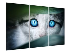 Obraz kočky (V020944V120803PCS)