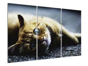Obraz kočky (V020963V120803PCS)