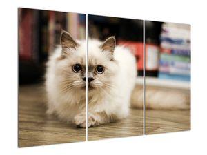 Obraz bílé kočky (V021124V120803PCS)