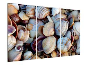 Kagyló képe (V021131V120803PCS)