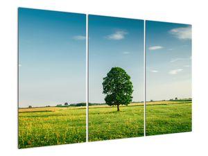 Obraz stromu na louce (V021171V120803PCS)