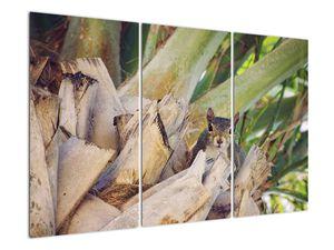 Obraz veverky na stromu (V021177V120803PCS)