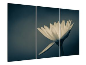 Obraz květiny (V021223V120803PCS)