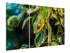 Obraz chameleona (V021236V120803PCS)