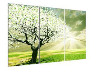 Obraz stromu na lúke (V021282V120803PCS)