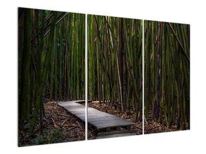 Obraz - Medzi bambusy (V021324V120803PCS)