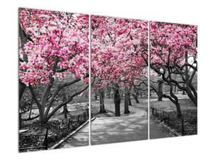 Obraz stromů Magnolíie (V021344V120803PCS)