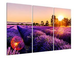 Obraz levandulového pole, Provence (V021590V120803PCS)