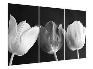 Kép - fekete-fehér tulipán virág (V021916V120803PCS)