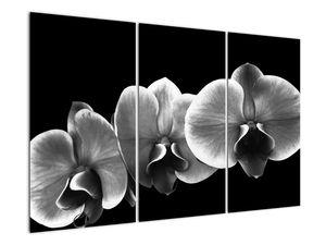 Obraz květu orchideje (V022015V120803PCS)