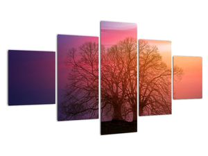 Obraz stromov v hmle (V020088V12570)