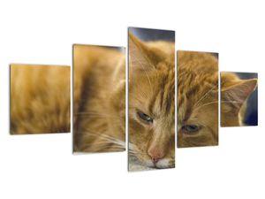 Obraz mačky (V020192V12570)