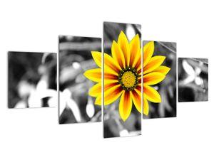 Obraz žluté květiny (V020361V12570)