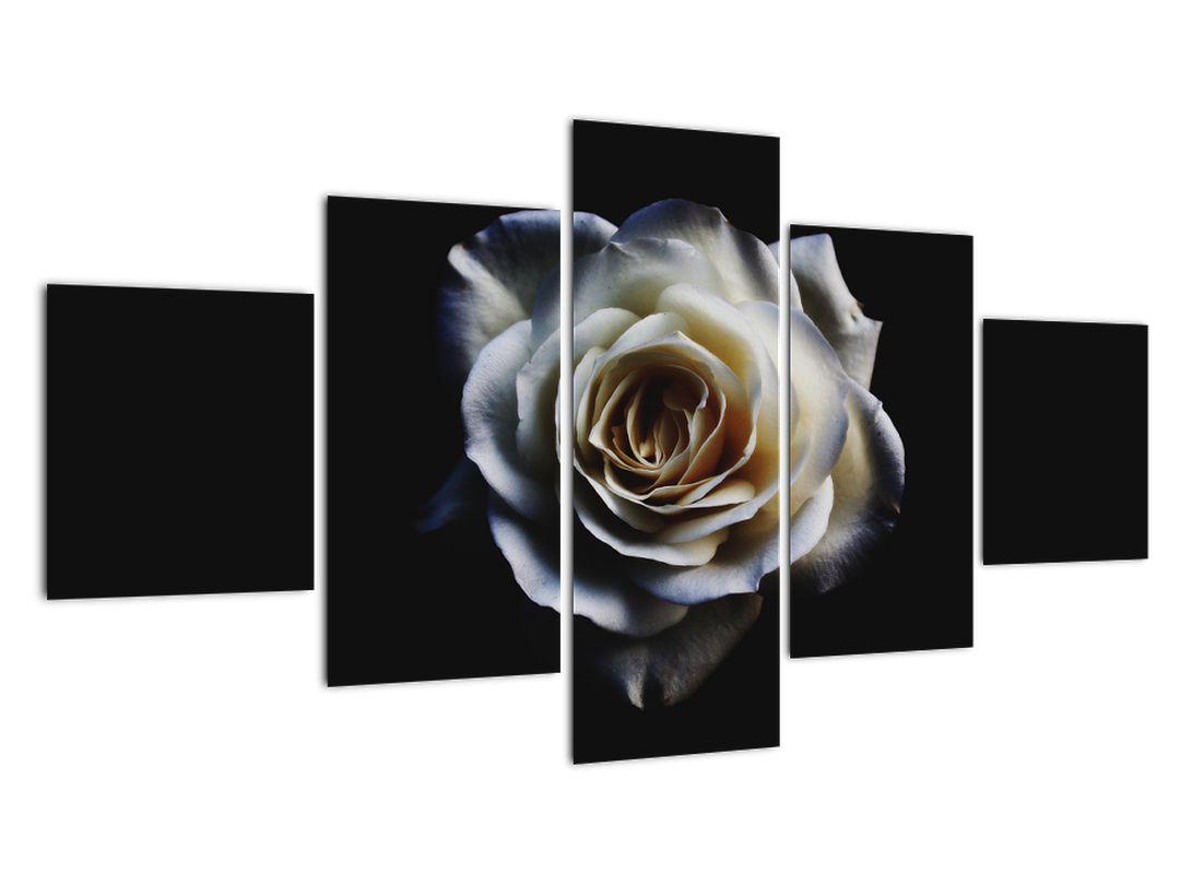 Obraz bílé růže (V020370V12570)
