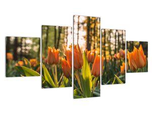 Obraz - oranžové tulipány (V020552V12570)
