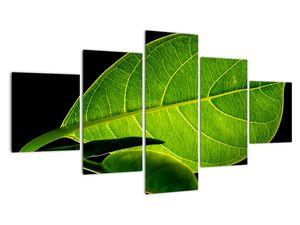 Obraz - zelený list (V020628V12570)