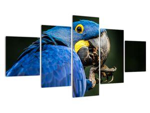 Obraz papouška (V020714V12570)
